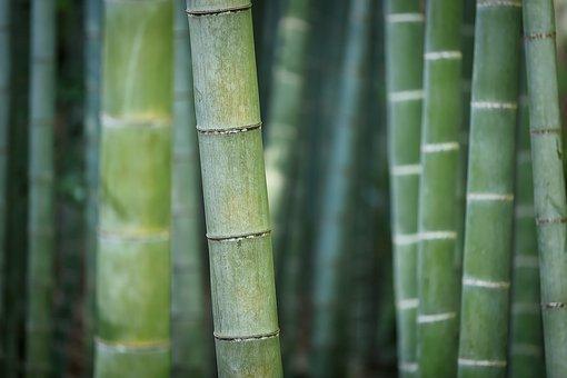 Organic Bamboo